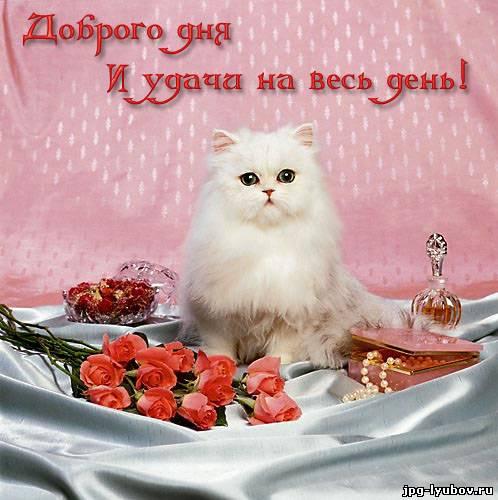 бесплатные Картинки с надписью Добрый день, романтические картинки про любовь