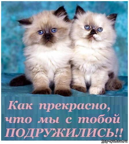 картинки с надписями про дружбу красивые
