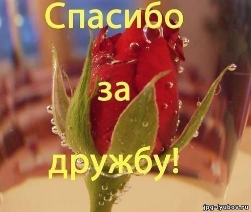 Картинки с надписью Спасибо за дружбу, романтические картинки про любовь