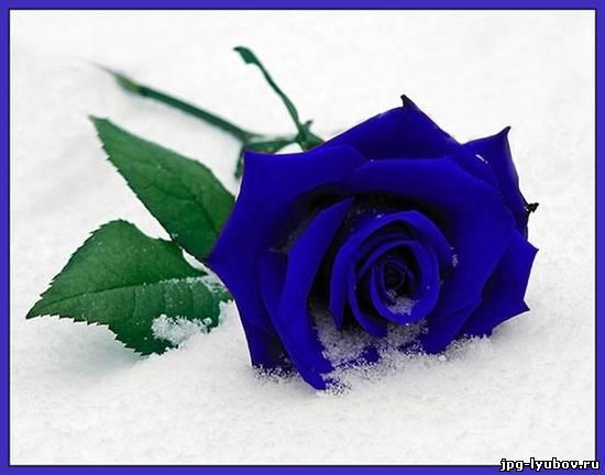 Картинки синие волосы - fbb8