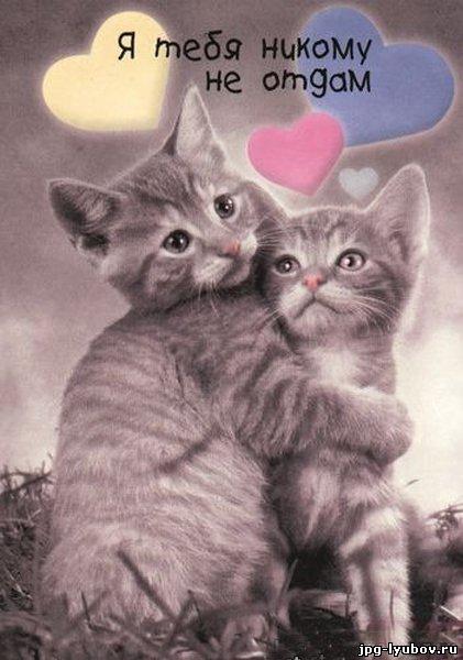 Красивая картинка из коллекции любовь