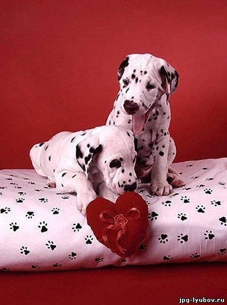 Картинки любовь у животных