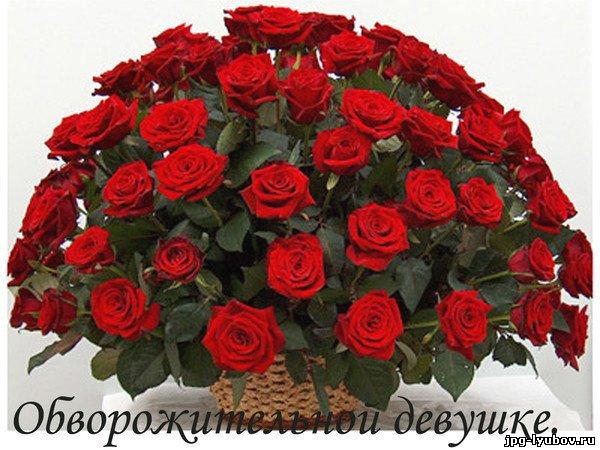 http://jpg-lyubov.ru/_ph/92/2/100858830.jpg