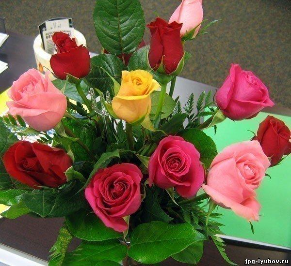 красивые Картинки Цветы бесплатно, картинки про любовь, на рабочий стол