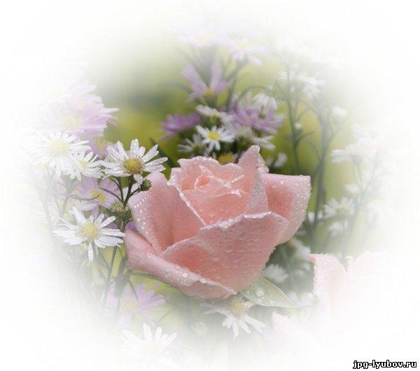 фото анимация цветы: