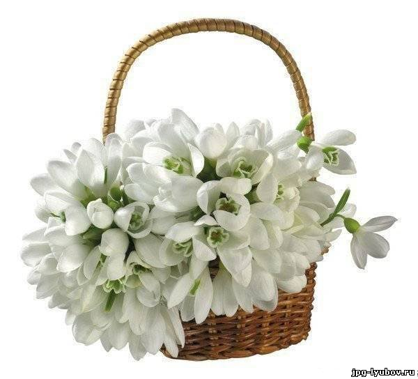Красивая картинка из коллекции цветы